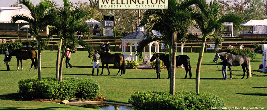 Wellington Equestrian Classifieds – A classified advertising